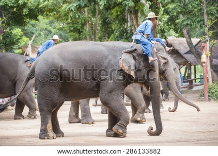 LAMPANG, THAILAND - JUNE 8 : Daily elephant show at The Thai Elephant Conservation Center (TECC), mahout show how to train elephant in forestry industry. June 8 ,2015 in Lampang, Thailand. #286133882