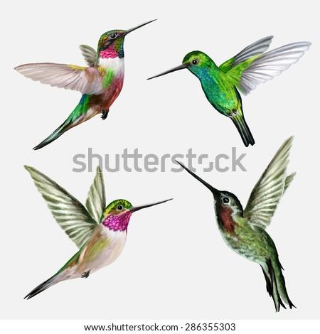 Set four small bird hummingbird