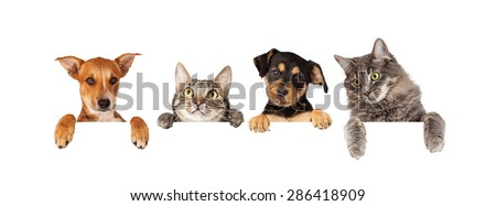 Row of cats and dogs hanging their paws over a white banner. Image sized to fit a popular social media timeline photo placeholder #286418909
