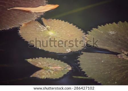 Lotus leaves #286427102