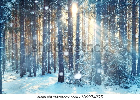 frosty winter landscape in snowy forest Royalty-Free Stock Photo #286974275