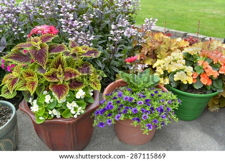 Different sizes and shapes of pots with colorful plants in full bloom. #287115869