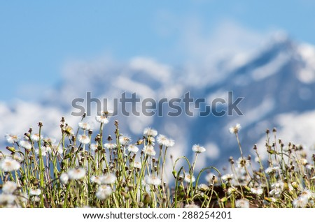 Mountain meadow with blurred background - spring flowers in Caucasus mountains near Sochi, Russia #288254201