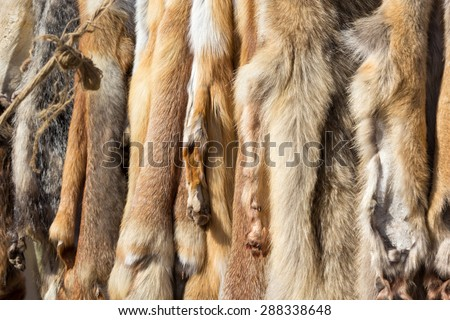 pelts of fur animals hang on a rope #288338648