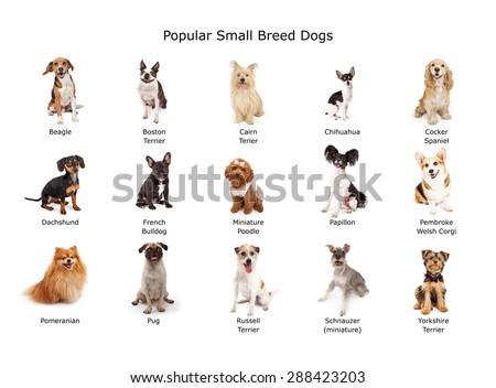 A group of fifteen common small breed domestic dogs #288423203