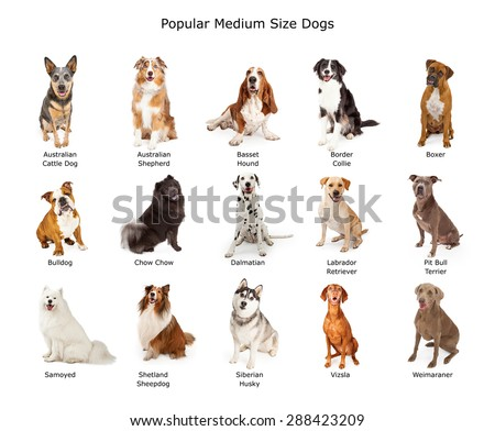 A group of fifteen different medium size family breed dogs  Royalty-Free Stock Photo #288423209