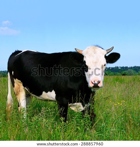 The calf on a summer pasture #288857960