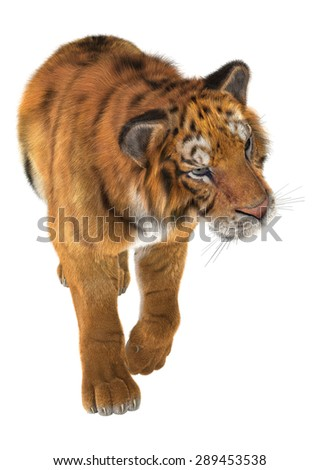3D digital render of a tiger walking isolated on white background #289453538
