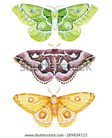watercolor butterfly moth, colorful butterfly, isolated object