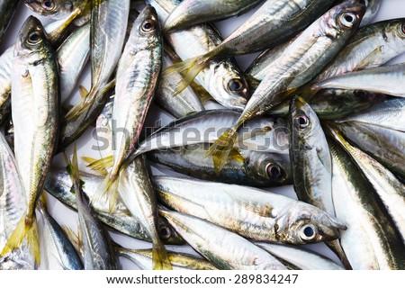 Black Sea fresh scad fish. Background  #289834247