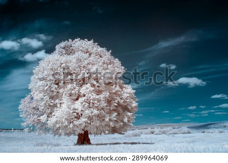 infrared photography. beautiful lonely tree in the sky many clouds.