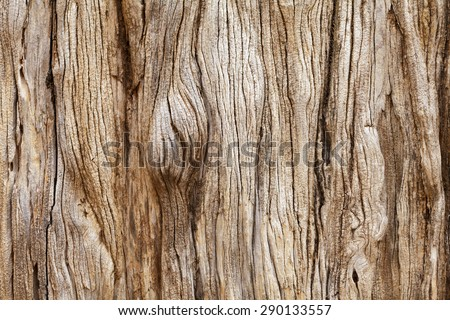 Weathered tree trunk textured background #290133557