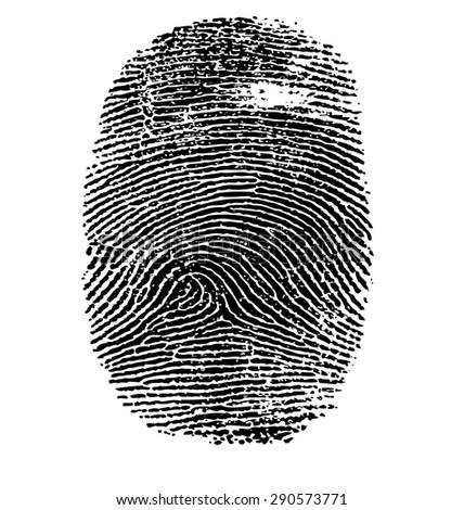 Vector illustration of fingerprint isolated on white #290573771