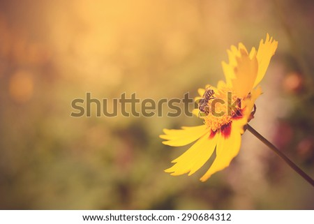 Soft photo of a beautiful bee and flowers a sunny day #290684312