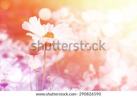 Sweet dreamy flower background, Soft Focus #290826590