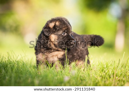 German shepherd puppy sitting outdoors in summer #291131840