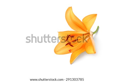 Lily #291303785