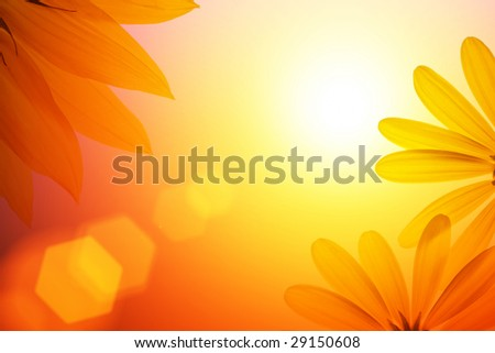 Sunshine background with sunflower details. #29150608