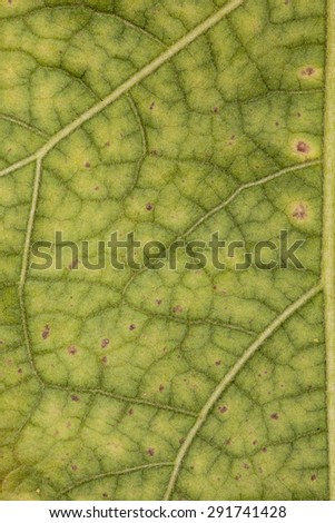 Abstract green leaf texture for background #291741428