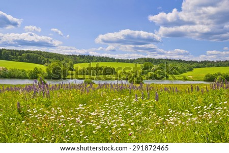 Summer afternoon. Muranovo, Moscow region, Russia #291872465