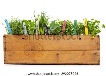 variety of herbs with name tags planted into vintage banana box, isolated on white #292075046