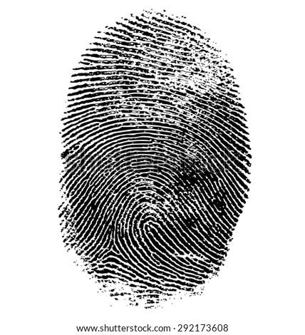 Vector illustration of fingerprint isolated on white #292173608