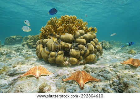 Underwater marine life on a shallow seabed with starfish, reef fish and corals, Caribbean sea, Mexico