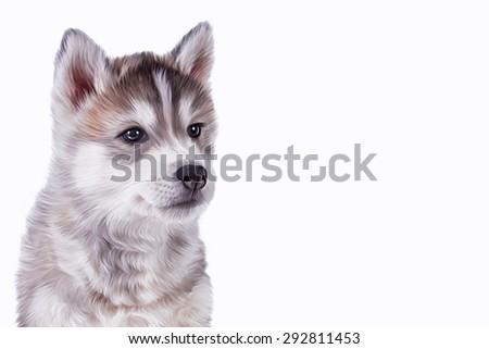 Drawing Husky dog, portrait on a white background #292811453