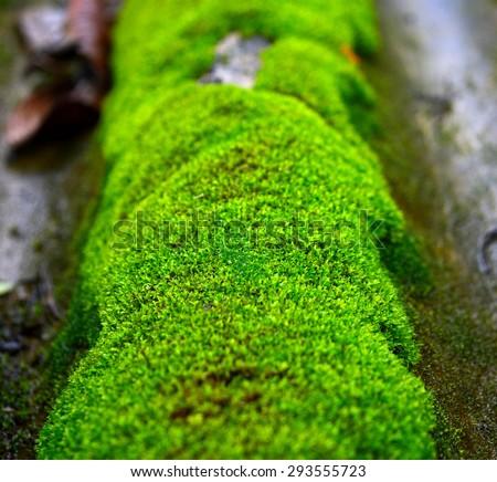 moss Royalty-Free Stock Photo #293555723