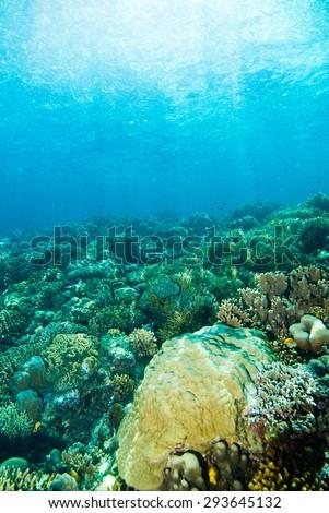 diver blue water scuba diving bunaken indonesia sea reef ocean #293645132