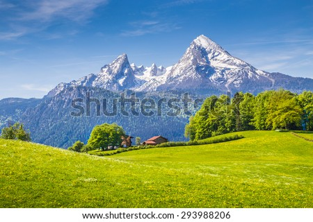 Idyllic landscape in the Alps with fresh green meadows and blooming flowers and snowcapped mountain tops in the background, Nationalpark Berchtesgadener Land, Bavaria, Germany Royalty-Free Stock Photo #293988206