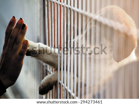 Human hand is touching a cute little doggie paw through a fence of a adoption centre. Royalty-Free Stock Photo #294273461