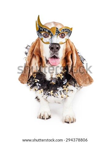 Funny photo of a happy Basset Hound breed dog wearing a black and gold Mardi Gras celebration mask and neck garland