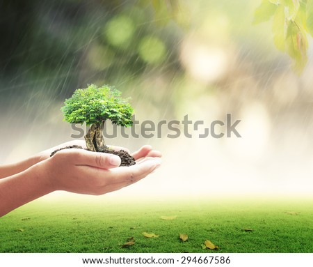 New begin concept: Educator hand holding big tree over nature background #294667586