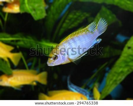 Aquarium fish  #294765338
