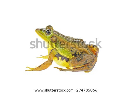 Frog isolated on a white background  #294785066