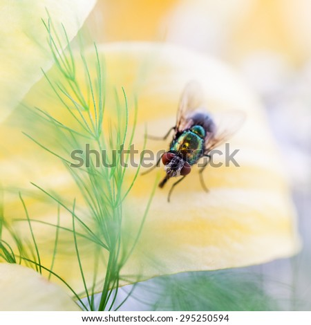 Green, small fly on flower petal #295250594