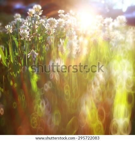 summer landscape background sun flowers Rays #295722083