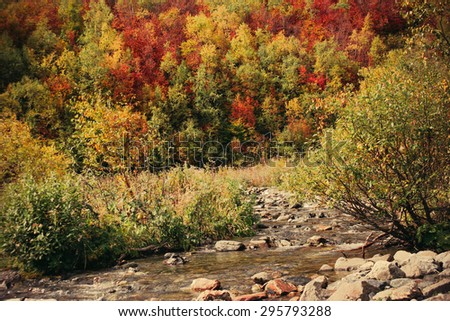 The mountain autumn landscape with colorful forest and high peaks Caucasus Mountains #295793288