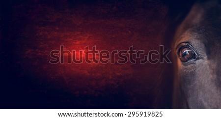 Horse eye on dark red background, banner for website