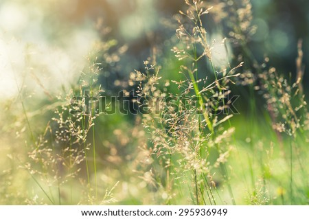 Green grass in the field with sunbeams. Blurred summer background, selective focus. #295936949