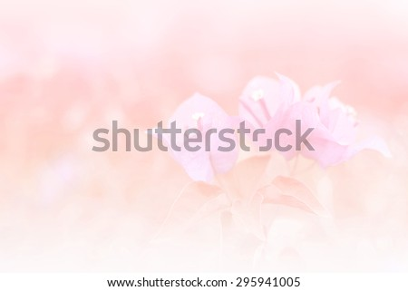 the  bougainvillea flower a color adjustment in soft style for background.;style image blur. #295941005