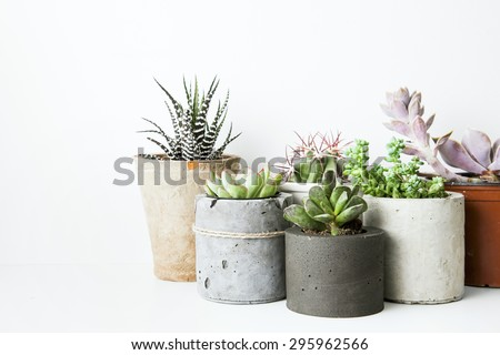 Succulents and cactus in different concrete pots on the white shelf. Scandinavian hipster home decoration Royalty-Free Stock Photo #295962566