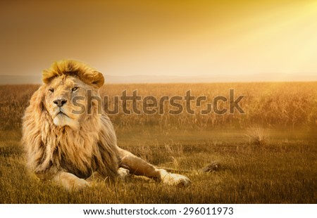 Big male lion lying on the grass Royalty-Free Stock Photo #296011973