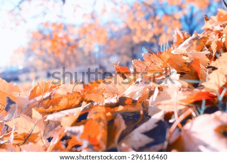 background texture of yellow leaves autumn leaf background Royalty-Free Stock Photo #296116460