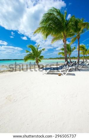 Palm and tropical beach #296505737