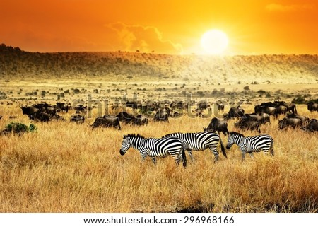 African landscape. Zebras herd and antelopes wildebeest at sunset, Kenya Royalty-Free Stock Photo #296968166