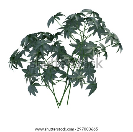 plant iSolated Collection #297000665
