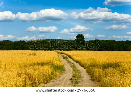 Country road through the wheaten field #29766550