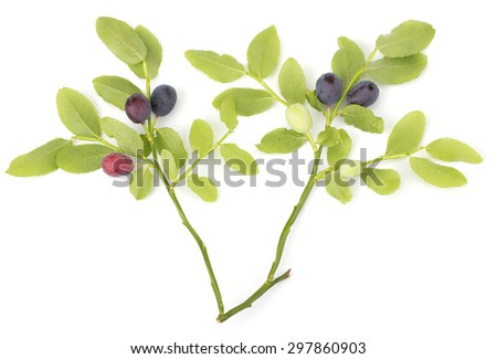 Fresh blueberries with leaves isolated on white background #297860903